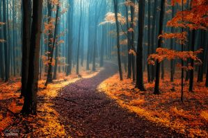 -Call of wandering- by Janek-Sedlar