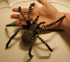 Araneae - handmade by Escaron