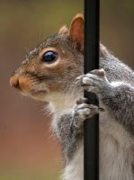 Stripper Pole Squirrel by GoGoGodzirra