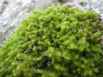 Moss Stock by FlyHigh20