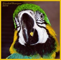 Parrot Head by mariquasunbird1