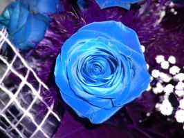 Blue rose by ClauDia18
