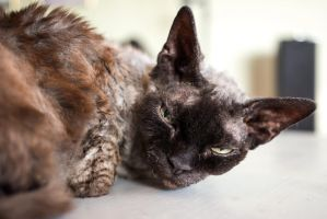 Little Old Cat by attomanen