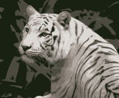 White Tiger 2 by rox52
