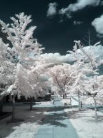 Infrared XVII by ilimel
