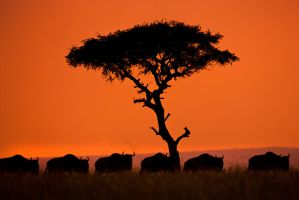 My Africa 51 by catman-suha
