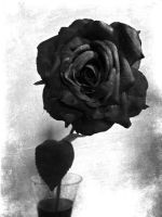 Black and White Rose by cryingunderwater