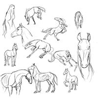 Horse studies by RasnovStables