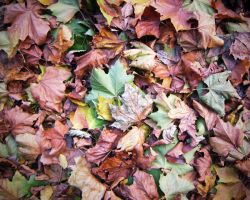 Pile of Leaves by TheBigDaveC
