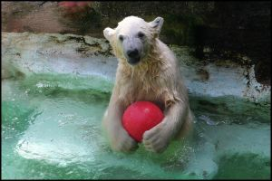 The ball is mine by AF--Photography