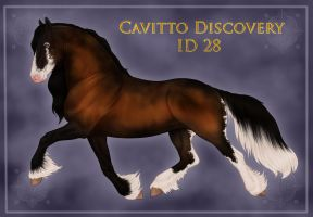 Cavitto Discovery 28 by sVa-BinaryStar