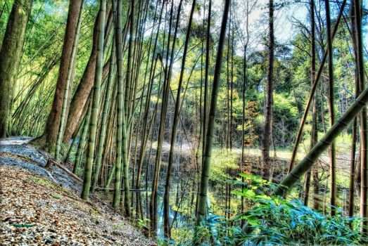 The Bamboo Forest - 13541 by kreativEVOLUTION