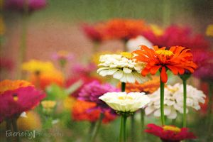 Shades of Summer by faeriefly