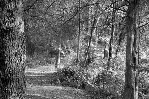 Wooded Path by sapierce567