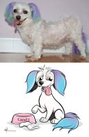 Dog Caricature 'Candy' with Photo by timmcfarlin