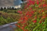 Kerry Hedgerow by cprmay