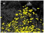 Bush - selective coloring by HippieOtter