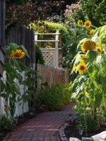 Provincetown Alley Garden by TheMightyQuinn