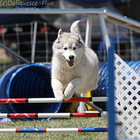 AKC Agility Trial 7 by Deliquesce-Flux