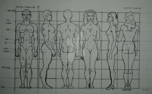 Ideal Human Proportions by StuartDuvall