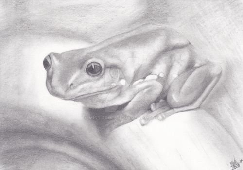 frog draw pencil by miss-frog