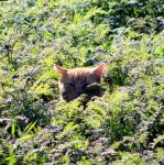 cat in the green by Mittelfranke