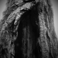 The Roots of a Tree 7 by Jude-Monteleone