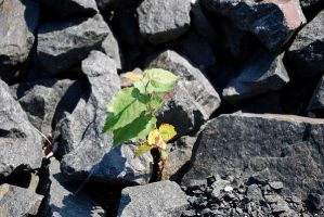 Little Plant with the Rocks by elmiry