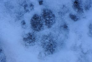 Paw Print by Valshe-chan
