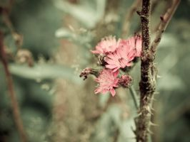 Hiding by sOLie-photo