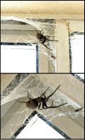 My pet spider by E-Dowely