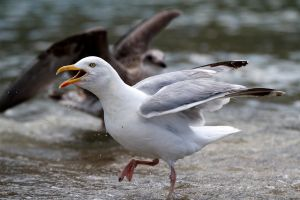 Seagull 06 Stock by lokinststock