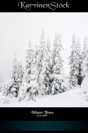 Winter Trees - Stock Photos by KarvinenStock