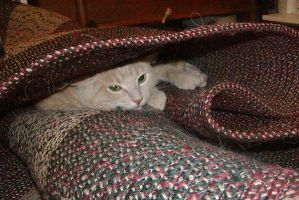 Cat in the Rug by MGMags