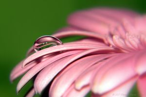 flower drop r by dini25