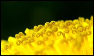 Reaching For Pollen 2 by FramedByNature