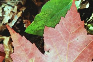 Many Tree Leaves by Cocotte-Vero91