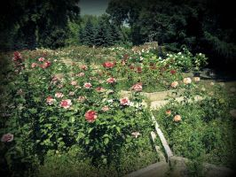 rosarium1 by mary-jane10