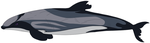 Hector's Dolphin Design by Dark-Little-Darkling