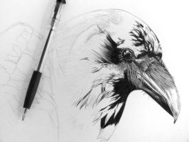 Crow - WIP by be-a-sin