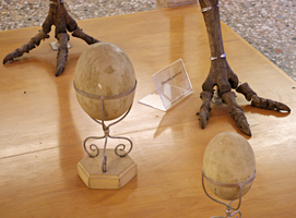 Restoration of Moa eggs by Lynus-the-Porcupine