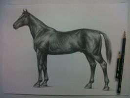 Horse s anatomy by David De Leon Luis by Daviddleonluis