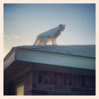 cat on a cool shingle roof by spoems