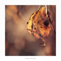 Never Fallen Leaf by mariv