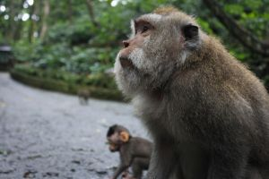 Monkey Forest by ProfSmiles