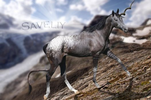 Saveliy Image by HorseWhisperer101