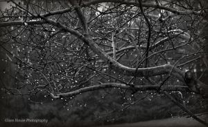 December Rain by GlassHouse-1