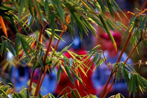 popular bamboo by GoTcHaSuCcA