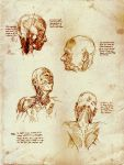 Anatomy Studies from Yokochi's by SILENTJUSTICE