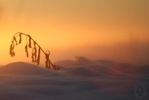 Mist and gold #4 by MiryamPhoto